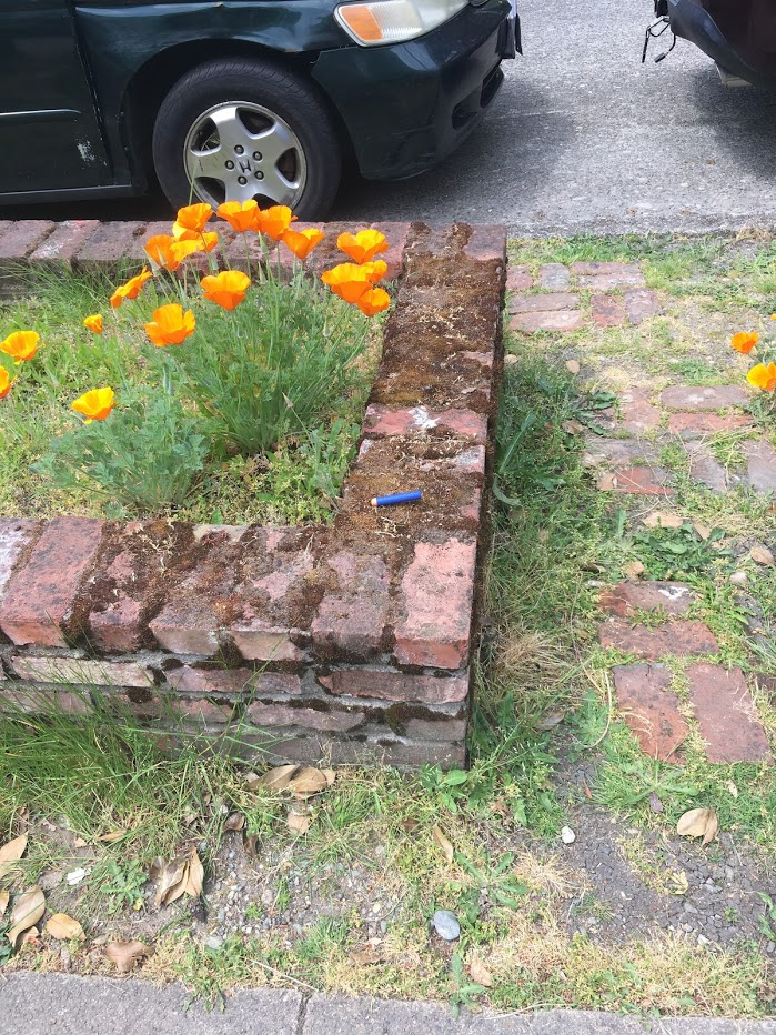 Yard picture: nerfgun dart next to California poppies.