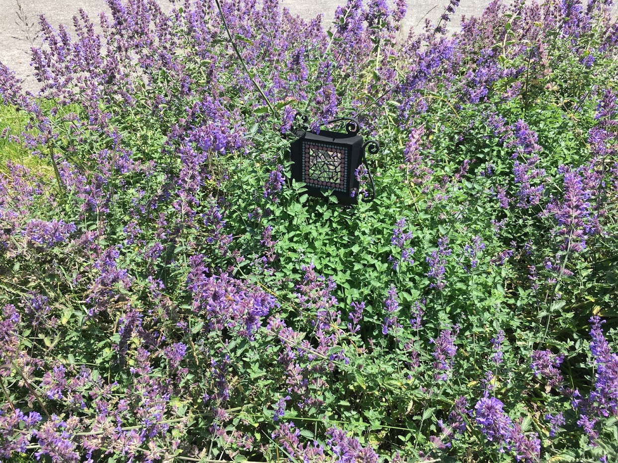 Yard picture: purple flowers with a mirror mosaic in the middle.