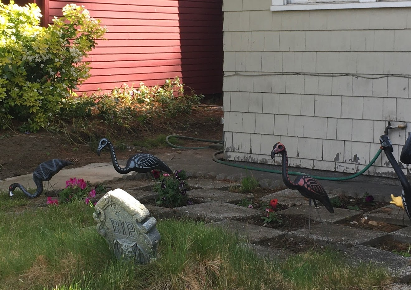 Yard picture: black flamingos with skeleton outlines painted on them in pink and white. RIP gravestone.