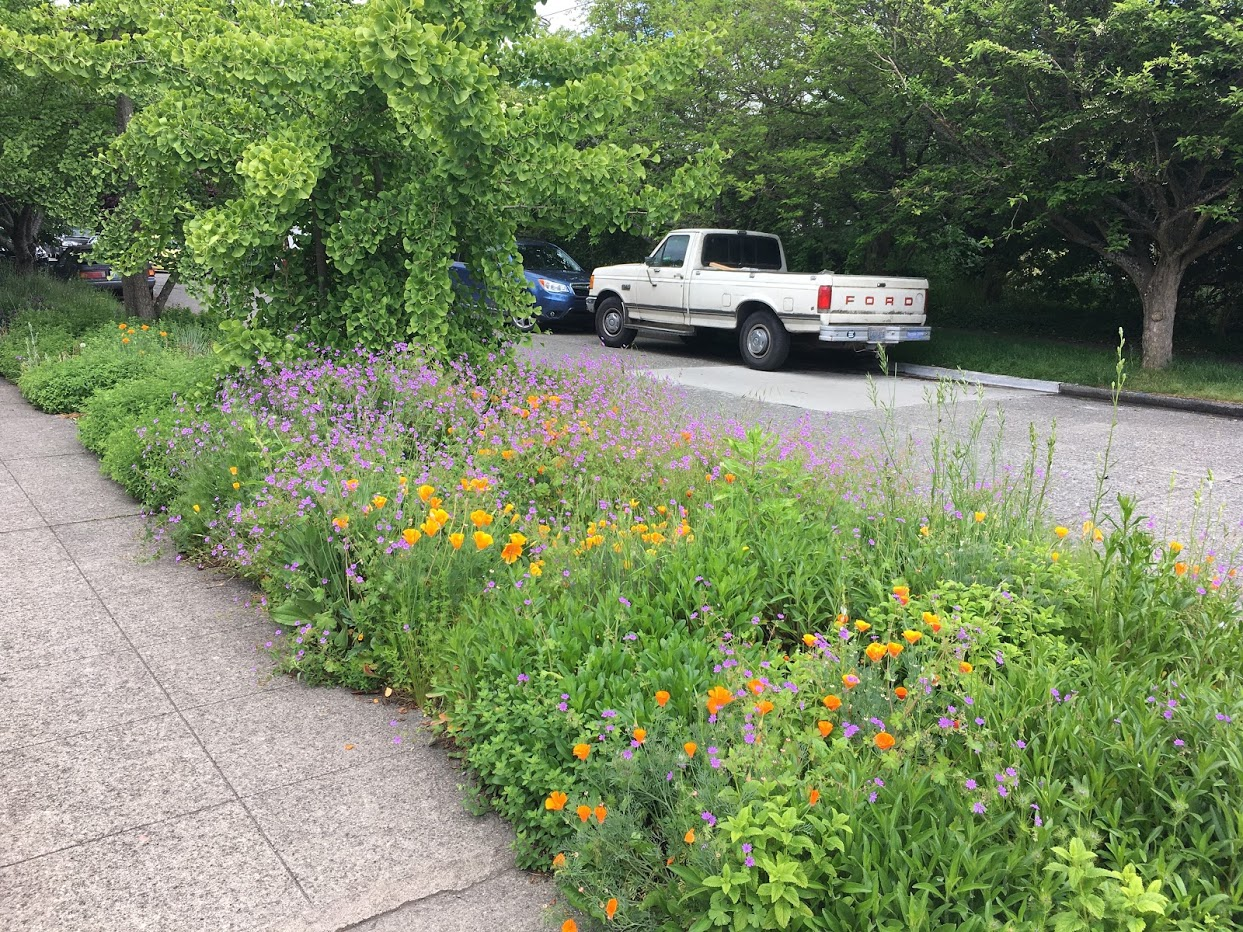Wildflowers between the sidewalk and road.